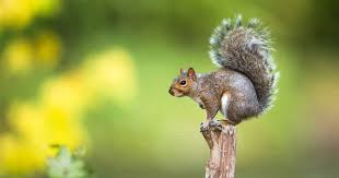 Is There a Squirrel in Your Office? | Aha!